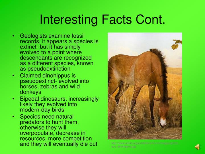 Interesting Facts Cont.