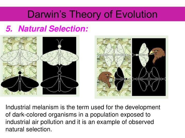 Darwin's Theory of Evolution