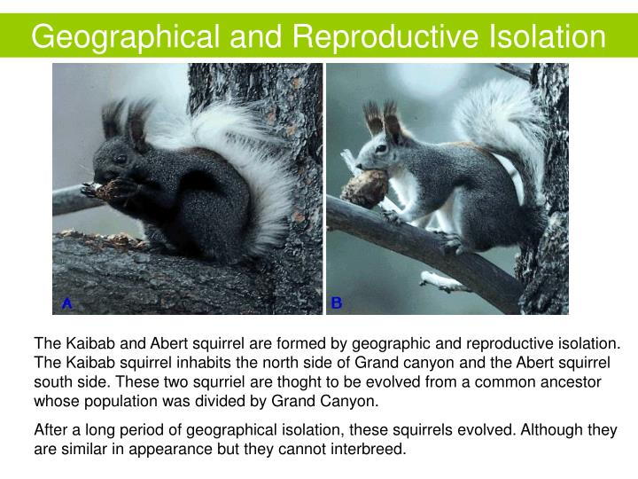 Geographical and Reproductive Isolation