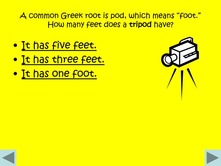 "A common Greek root is pod, which means ""foot."" How many feet does a"