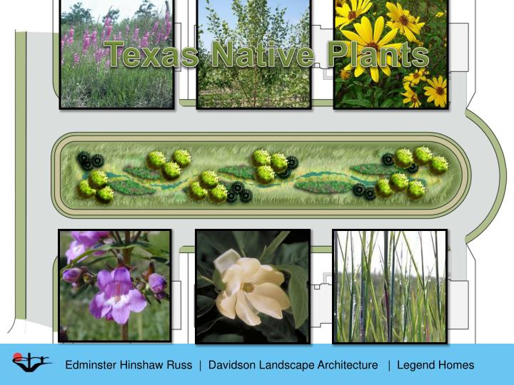 Texas Native Plants