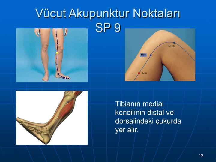 Vücut Akupunktur Noktaları