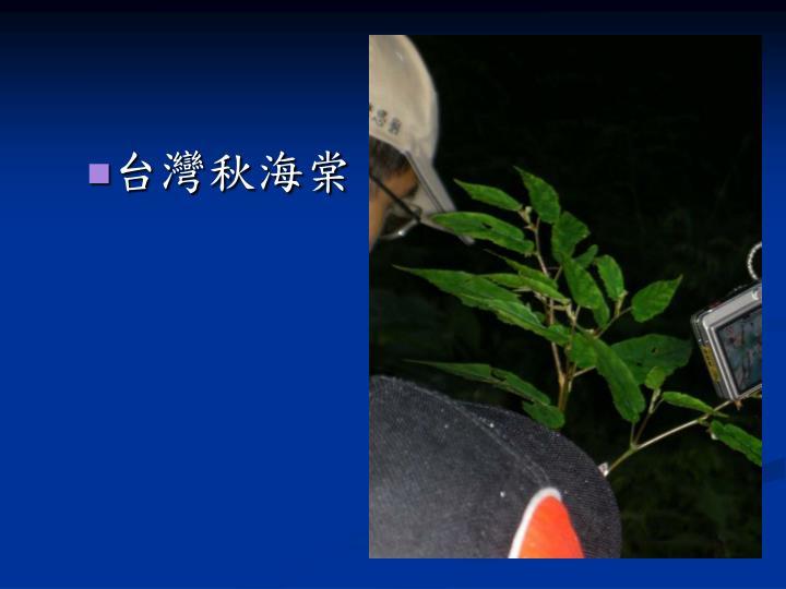 台灣秋海棠