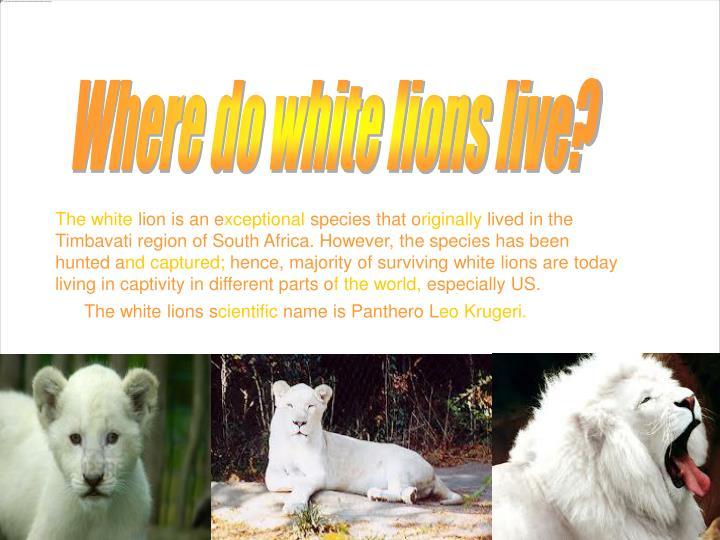 Where do white lions live?