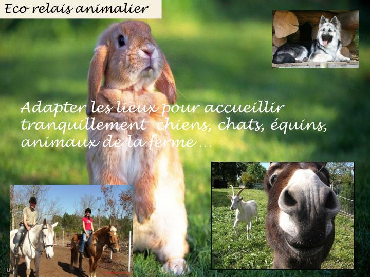 Eco relais animalier