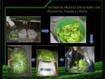 sistema de producci n de baby leaf poscosecha empaque y marca
