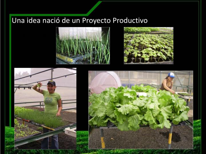 Una idea nació de un Proyecto Productivo