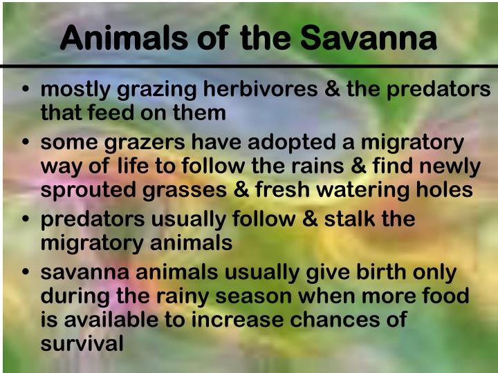 mostly grazing herbivores & the predators that feed on them