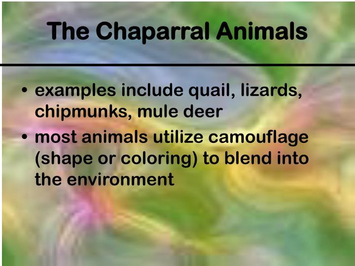 examples include quail, lizards, chipmunks, mule deer
