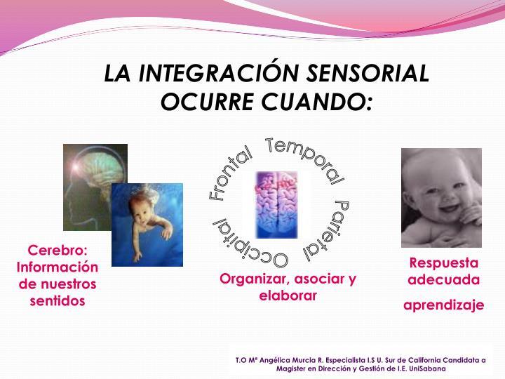 Frontal   Temporal   Parietal   Occipital