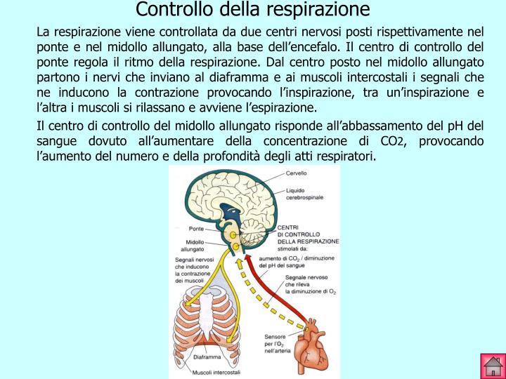 Controllo della respirazione