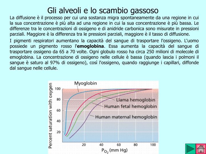 Gli alveoli e lo scambio gassoso