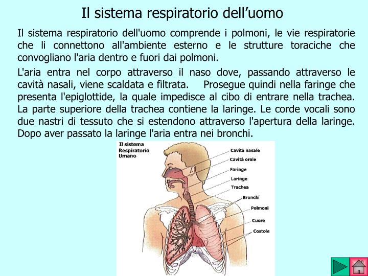 Il sistema respiratorio dell'uomo