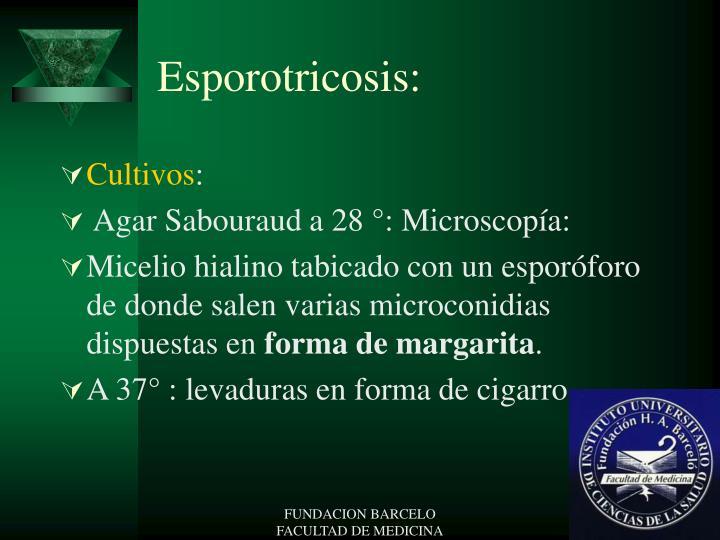 Esporotricosis: