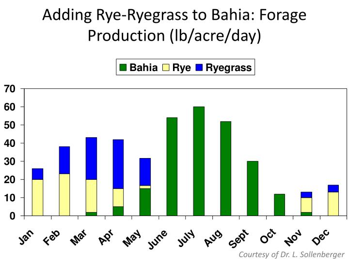 Adding Rye-Ryegrass to Bahia: Forage Production (lb/acre/day
