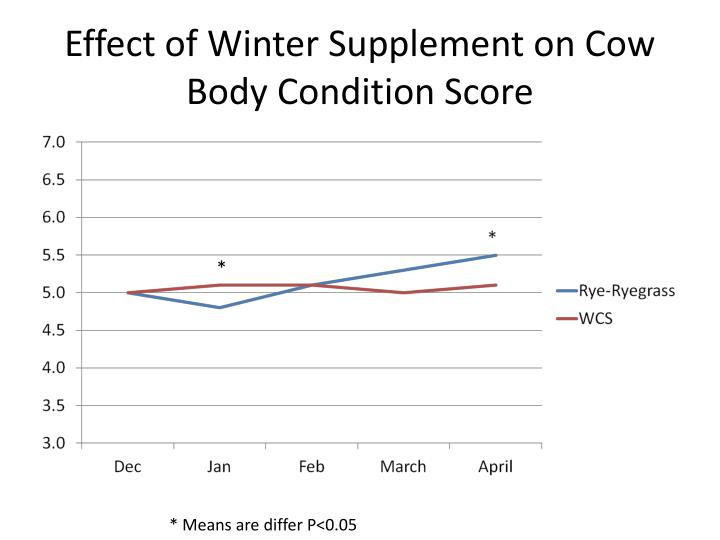 Effect of Winter Supplement on Cow Body Condition Score