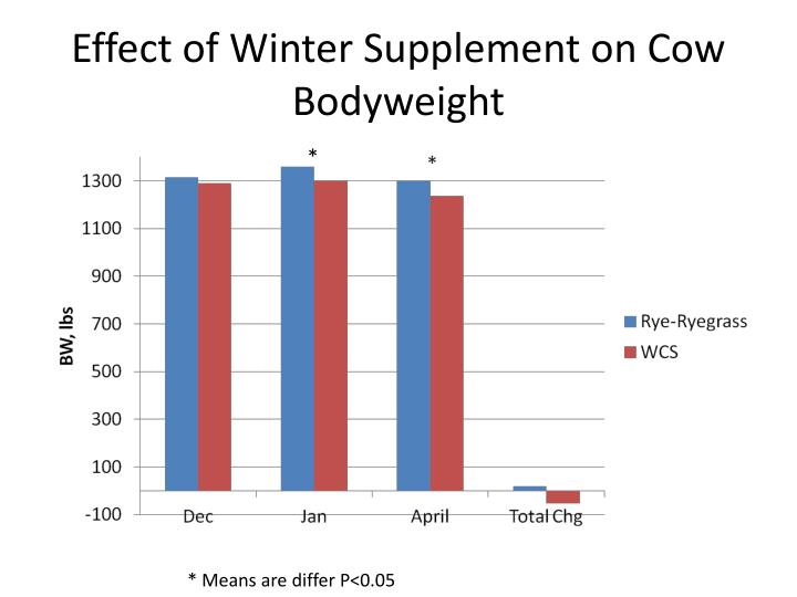 Effect of Winter Supplement on Cow Bodyweight