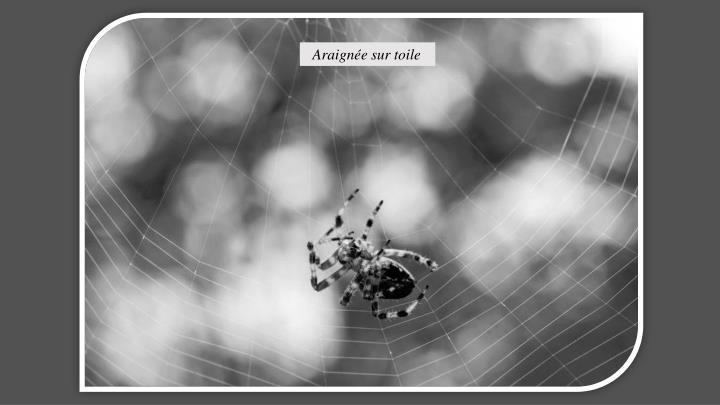 Araignée sur toile