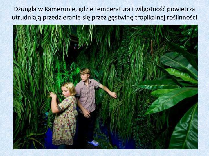 Dżungla w Kamerunie, gdzie temperatura i wilgotność powietrza utrudniają przedzieranie się przez gęstwinę tropikalnej roślinności
