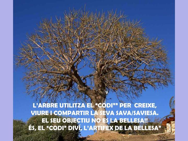"""L'ARBRE UTILITZA EL """"CODI"""""""" PER  CREIXE, VIURE I COMPARTIR LA SEVA SAVA/SAVIESA."""