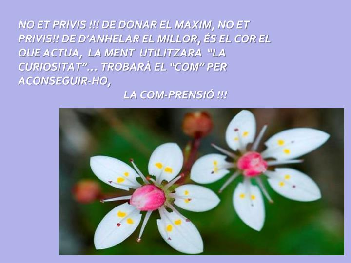 NO ET PRIVIS !!! DE DONAR EL