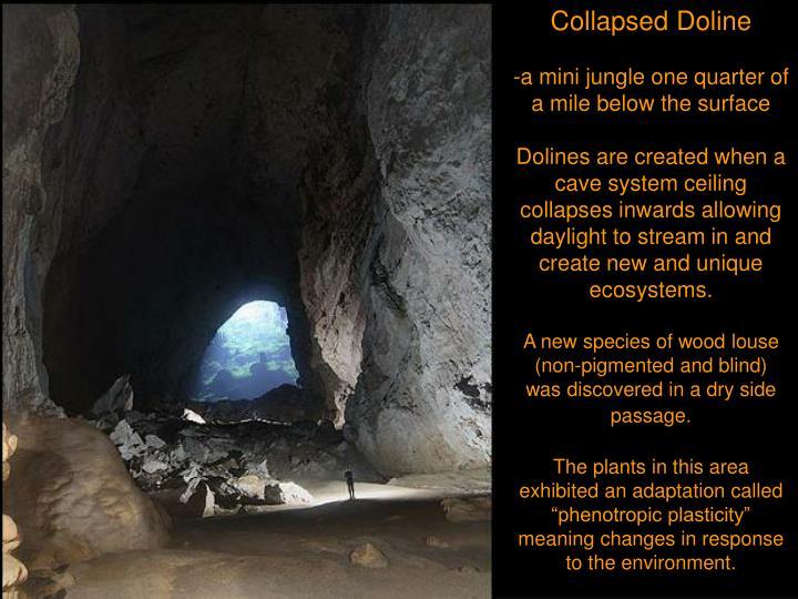Collapsed Doline