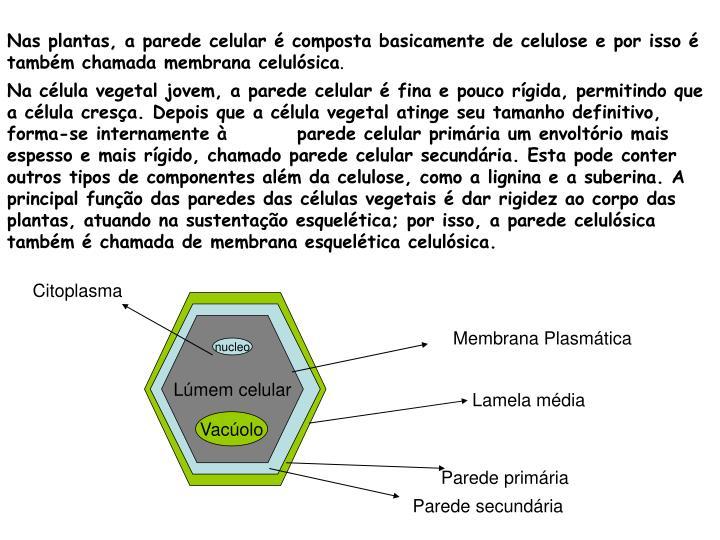Nas plantas, a parede celular é composta basicamente de celulose e por isso é também chamada membrana celulósica