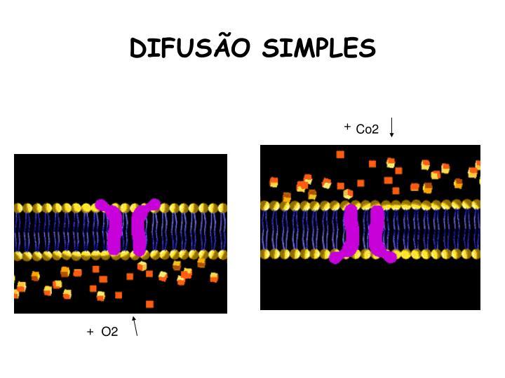 DIFUSÃO SIMPLES