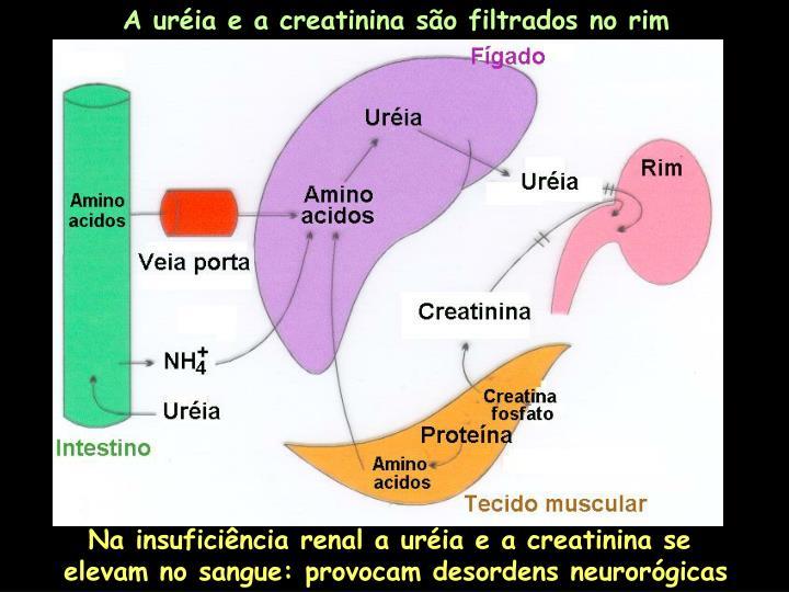 A uréia e a creatinina são filtrados no rim