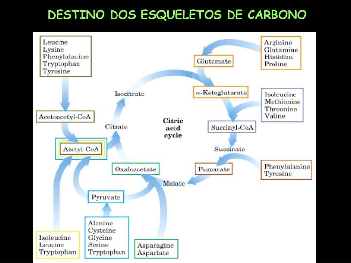 DESTINO DOS ESQUELETOS DE CARBONO