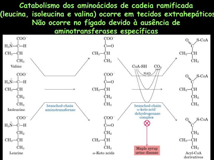 Catabolismo dos aminoácidos de cadeia ramificada