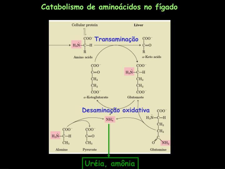 Catabolismo de aminoácidos no fígado