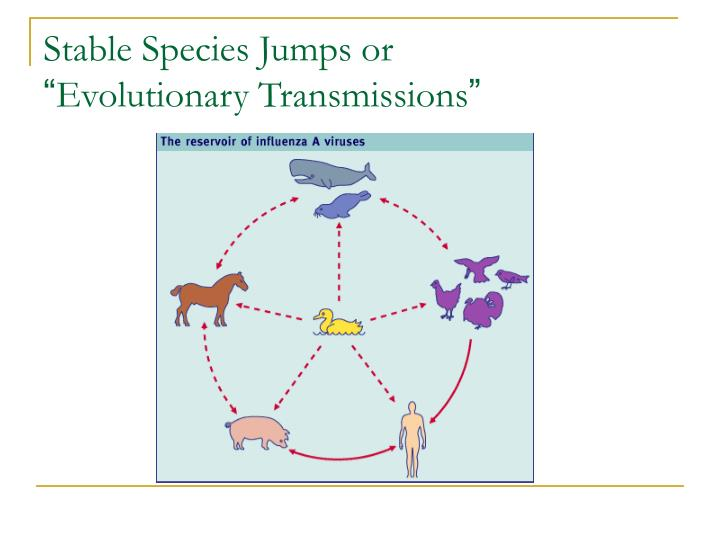 Stable Species Jumps or