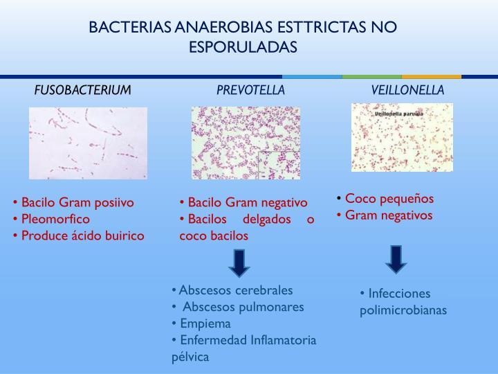 BACTERIAS ANAEROBIAS ESTTRICTAS NO ESPORULADAS