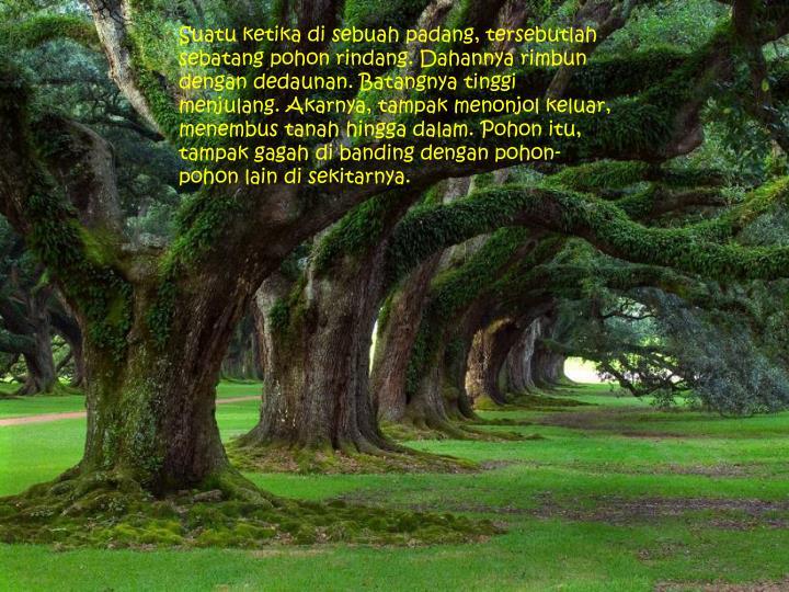 Suatu ketika di sebuah padang, tersebutlah sebatang pohon rindang. Dahannya rimbun dengan dedaunan. Batangnya tinggi menjulang. Akarnya, tampak menonjol keluar, menembus tanah hingga dalam. Pohon itu, tampak gagah di banding dengan pohon-pohon lain di sekitarnya.