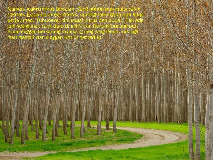 Namun, waktu terus berjalan. Sang pohon pun mulai sakit-sakitan. Daun-daunnya rontok, ranting-rantingnya pun mulai berjatuhan. Tubuhnya, kini mulai kurus dan pucat. Tak ada lagi kegagahan yang dulu di milikinya. Burung-burung pun mulai enggan bersarang disana. Orang yang lewat, tak lagi mau mampir dan singgah untuk berteduh.