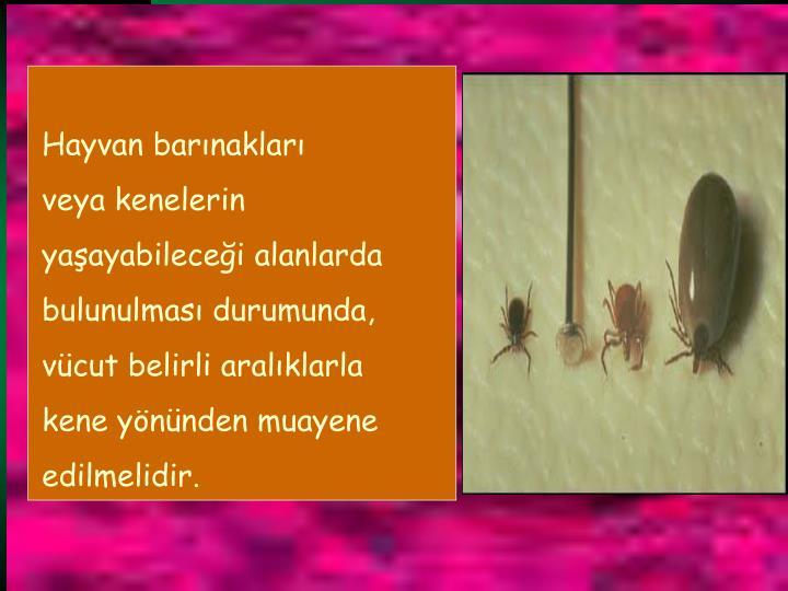 Hayvan barnaklar
