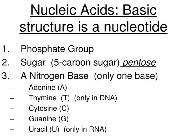 Nucleic Acids: Basic structure is a nucleotide