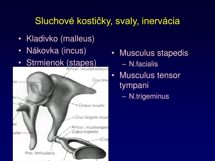 Kladivko (malleus)
