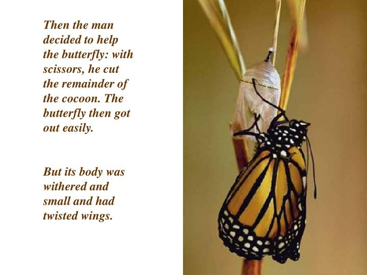 Then the man decided to help the butterfly: with scissors, he cut the remainder of the cocoon. The butterfly then got out easily.