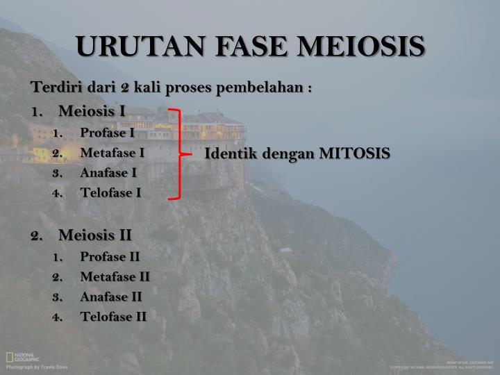 URUTAN FASE MEIOSIS