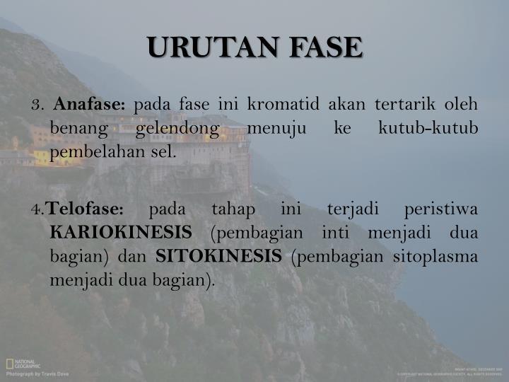 URUTAN FASE