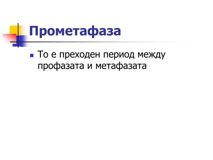 Прометафаза