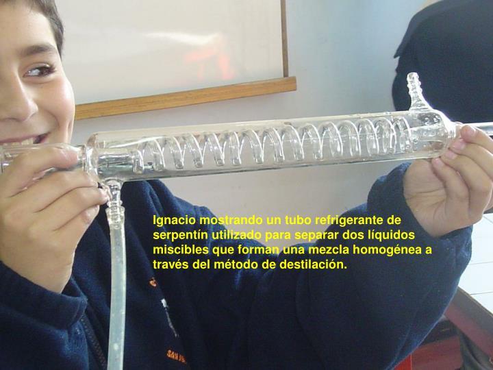 Ignacio mostrando un tubo refrigerante de serpentín utilizado para separar dos líquidos miscibles que forman una mezcla homogénea a través del método de destilación.