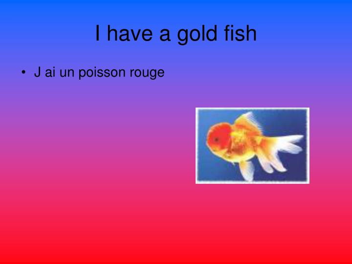 I have a gold fish