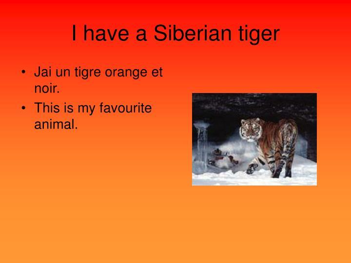 I have a Siberian tiger
