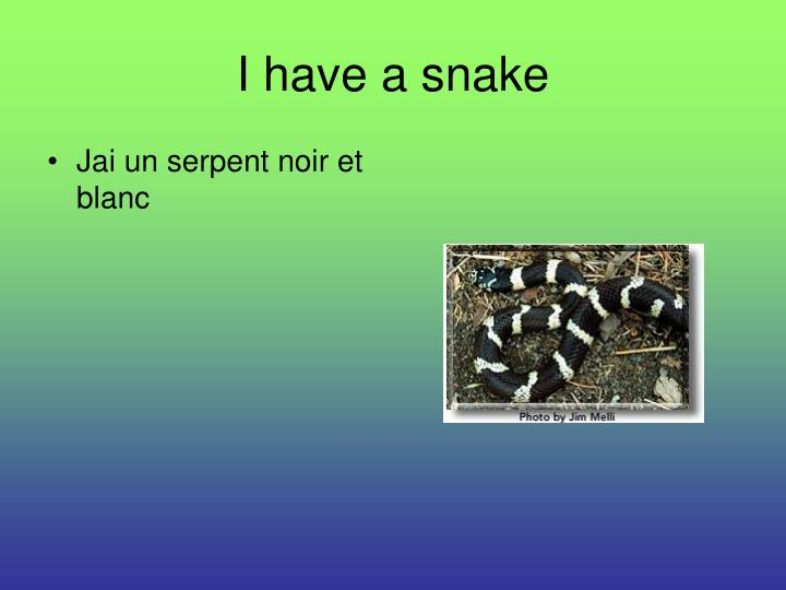 I have a snake
