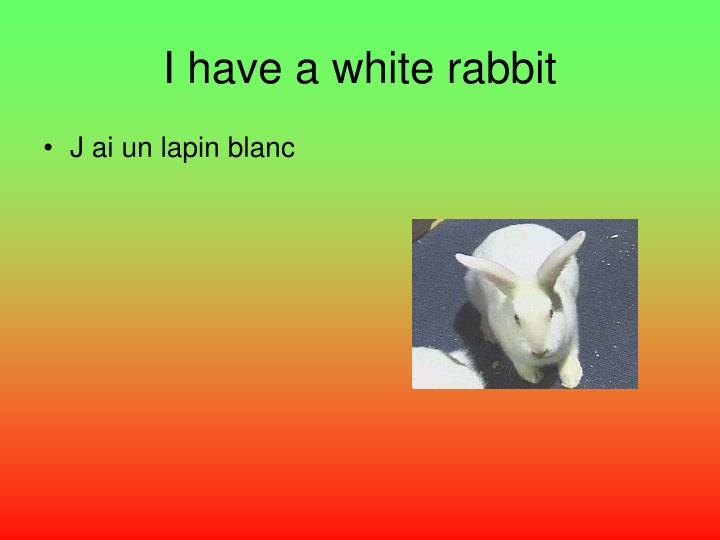 I have a white rabbit