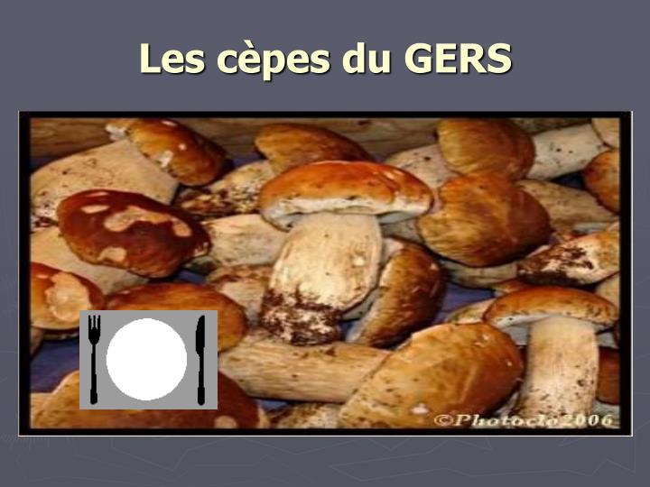 Les cèpes du GERS