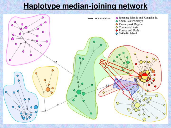 Haplotype median-joining network